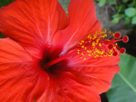 fleur du trarza